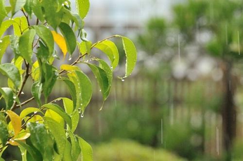 福山市内雨の様子写真