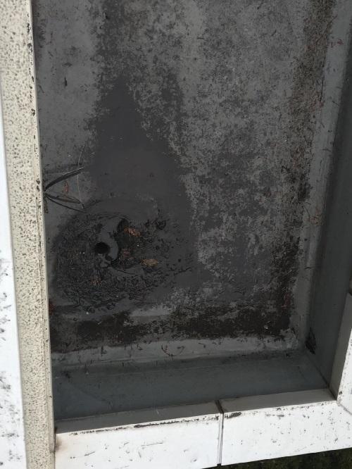 屋上屋根排水溝のよごれ写真