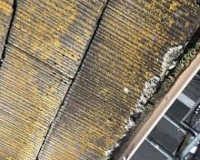 屋根の苔や藻