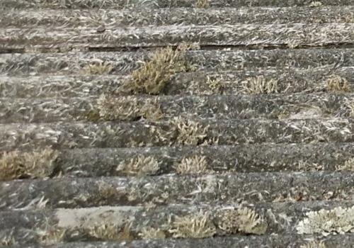 苔の生えた屋根