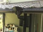 竪樋の新しい写真②
