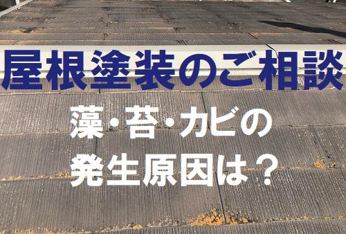福山市で屋根塗装のご相談|屋根の苔やカビの発生原因は?